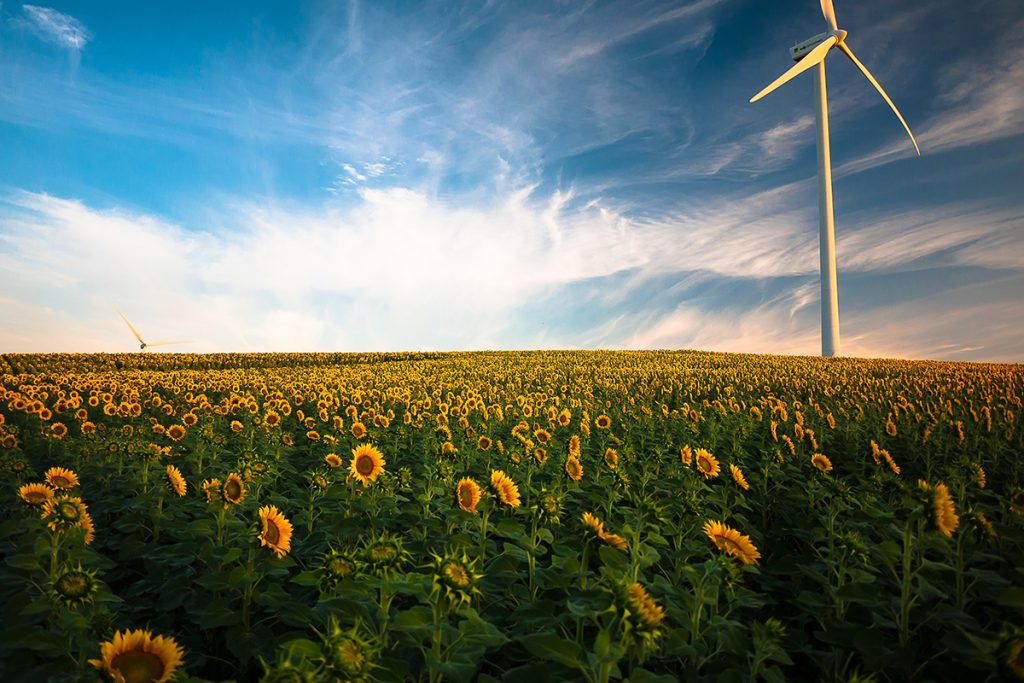 POST2 windpower flowers 1024x683 - 6 Undeniable Benefits of Renewable Energy Solutions in Canada